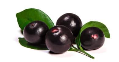 acai baer en frugt fra amazonas kendt som superfood 390x205