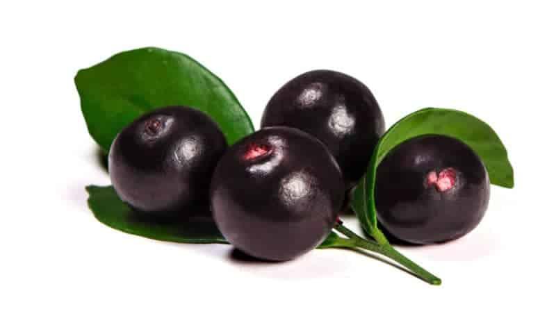 acai baer en frugt fra amazonas kendt som superfood 800x445